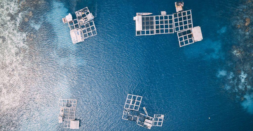L'aquaculture au Sénégal, un secteur d'avenir